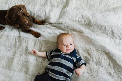 Bebés y perros - conociendo al bebé