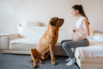 Bebés y perros - adaptación