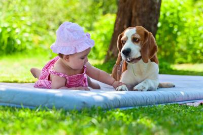 Bebés y perros - jardín