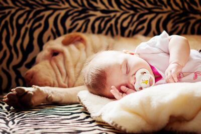 Bebés y perros_durmiendo