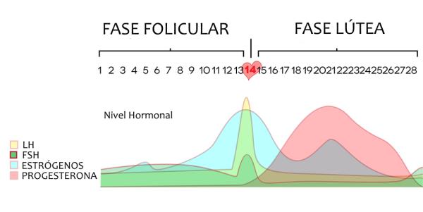 Ovulacioón ciclo hormonal